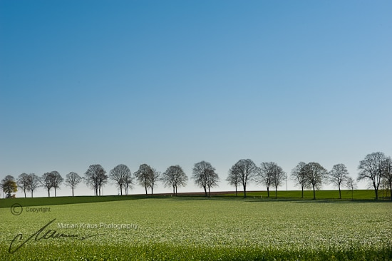 Tree lined rural highway in Nortrhine Westphalia, Germany
