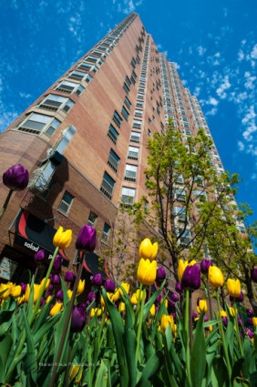 Chestnut Place apartment building in spring.